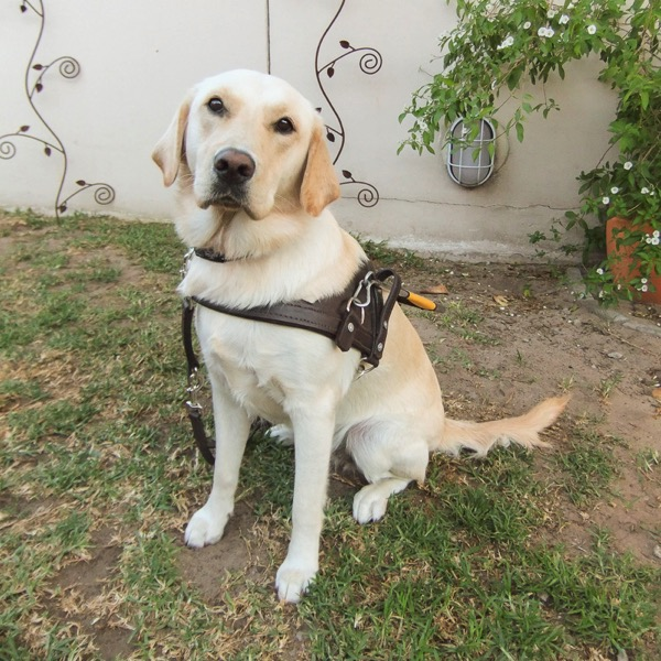 the image shows a grinning Fiji wearing her harness
