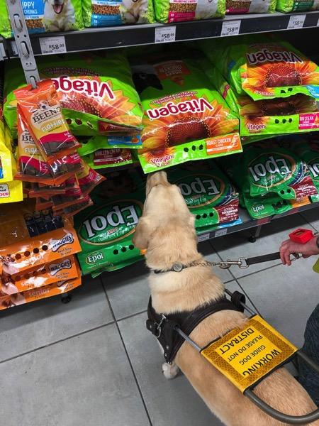Fiji looking at a bag of dog food